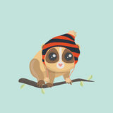 Cute slow loris Royalty Free Stock Photo