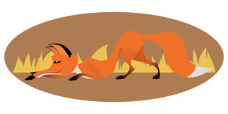 Cute sly fox Stock Photography