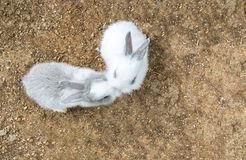 Cute Small Baby Easter Bunny (White and Gray Rabbit) Kissing in Heart like Shape in The Park Stock Image