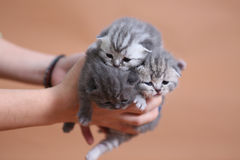 Cute small baby kittens Royalty Free Stock Photography