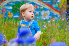 Cute small boy at the field of flowers having good time Stock Photography