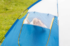Cute small boy in a tent. He looks through the net Royalty Free Stock Photography