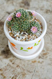 Cute small cactus with flower in pot Stock Photography