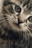 Cute small cat Royalty Free Stock Photography