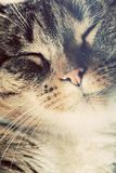 Cute small cat portrait. Eyes closed in sleepy, happy time. Royalty Free Stock Photo