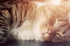 Cute small cat sleeping. Happy expression Stock Photos