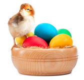 Cute small chick with easter eggs Stock Photography
