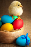 Cute small chick with easter eggs Stock Image