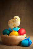 Cute small chick with easter eggs Royalty Free Stock Photo