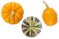 Cute small decorative pumpkins isolated on white background. Cute small decorative pumpkins isolated on a white background Stock Photos