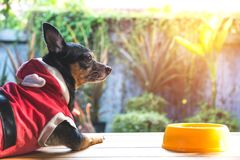 Cute small dog with bowl of dog food. Pets is feeding concept royalty free stock photo