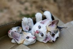 Cute small domestic kittens cat in brown paper box. Curious group of cute small domestic kittens cat in brown paper box stock image