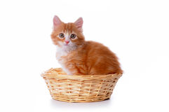 Cute small kitten in a basket Royalty Free Stock Photos