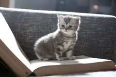Cute small kitten Stock Image