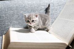 Cute small kitten Stock Images