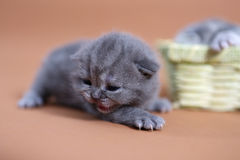 Cute small kitten Royalty Free Stock Photos
