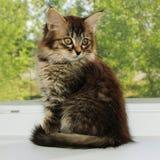 Cute small kitten Stock Photography