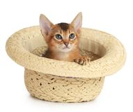Cute small kitten in a hat Stock Photography