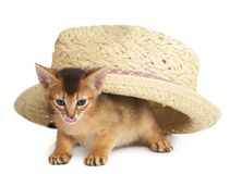 Cute small kitten in a hat Royalty Free Stock Photography
