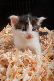 Cute and small kitten Royalty Free Stock Photos