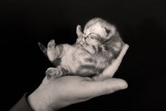 Cute small kitten new born Royalty Free Stock Image