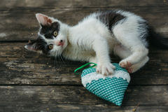Cute small kitten playing with heart pillow. Cute small lovely curious baby cat or kitten with white color spotted fur and whiskers playing with heart shape Royalty Free Stock Photo