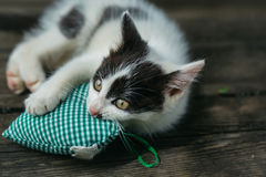 Cute small kitten playing with heart pillow Stock Images