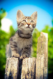 Cute small kitten sits on wood stump and look sky outdoor Royalty Free Stock Images