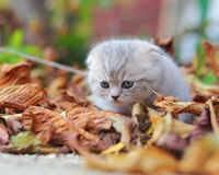 Cute small kitten sitting on autumn Royalty Free Stock Photos