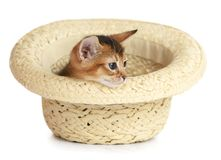 Cute small kitten sitting in a hat Royalty Free Stock Images
