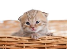 Cute small kitten in wicker basket Royalty Free Stock Photos
