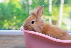 Cute small light brown bunny rabbit stay inside pink bathtub on wood table with green nature background royalty free stock image