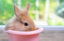 Cute small light brown bunny rabbit stay inside pink bathtub on wood table with green nature background royalty free stock photos