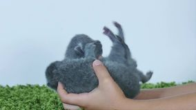 Cute one day old kittens stock video