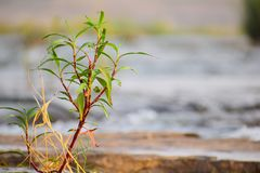 Cute Small plants stock image