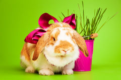 Cute small rabbit with bow on green background Stock Photos