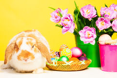 Cute small rabbit with flowers and Eastern eggs Stock Photography