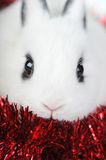 Cute small rabbit and red ribbon
