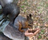 Cute small Squirrel Stock Photo