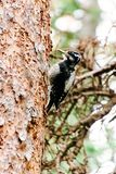Cute small woodpecker perched on the side of a tree stock images