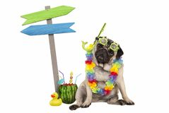 Cute smart pug puppy dog sitting down with watermelon cocktail, wearing hawaiian flower garland, goggles and snorkel, next to wood. En signpost with arrows,  on Stock Photos
