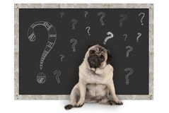 Cute smart pug puppy dog sitting in front of blackboard with chalk question marks. Isolated on white background royalty free stock photos
