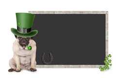 Cute smart pug puppy dog with st. patrick`s day hat and pipe sitting next to blank blackboard sign with shamrock and horseshoe Royalty Free Stock Image