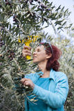 Cute smiling brunette woman harvesting organic olives Stock Photo