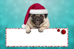 Cute smiling Christmas pug puppy dog with santa hat, hanging with paws on blank sign. On blue background stock images