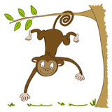 Cute smiling monkey hanging from the tree on its tail Royalty Free Stock Photography
