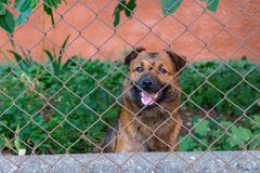 Cute smiling puppy in waiting pose behind fence. Young dog in backyard. Animal friend concept. Stock Photo