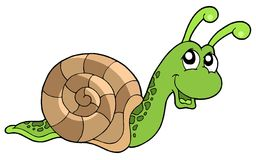 Cute snail. On white background - vector illustration Stock Image