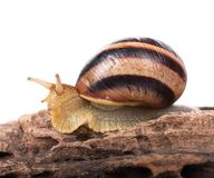 Cute snail Stock Photography