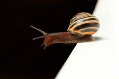 Cute snail on edge Royalty Free Stock Photos